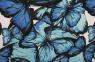 Schmetterlinge blau